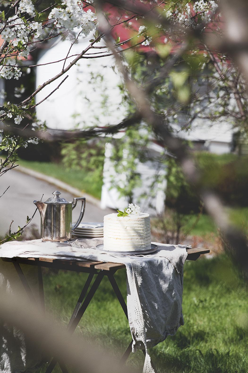 tea table through tree